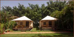 best tents near mahabaleshwar